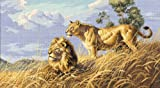 Dimensions Needlecrafts Counted Cross Stitch, African Lions