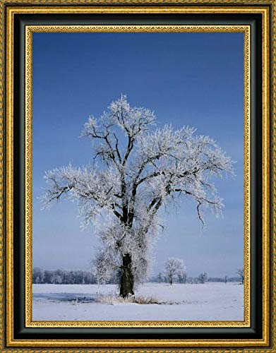 Canada, St Adolphe, Hoarfrost on Cottonwood Tree by Mike Grandmaison - 18.25