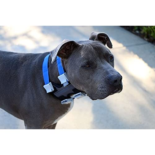 cheap Pack Leader Collar - Large