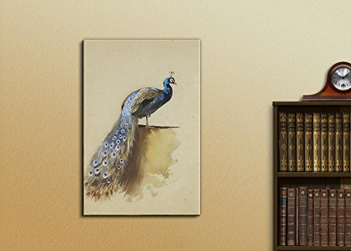 Beautifully Drawn Peacock Standing with It's Feathers Down