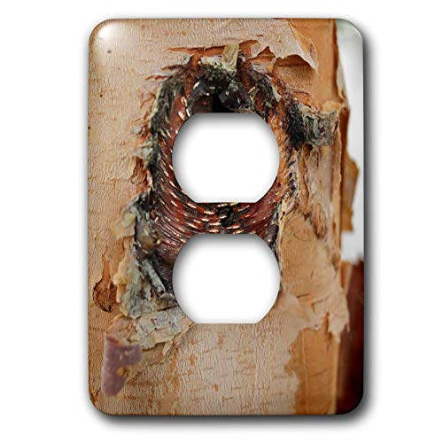 (3dRose Stamp City - nature - Close up photo of the bark of a river birch resembling an angry bird. - Light Switch Covers - 2 plug outlet cover (lsp_301356_6))