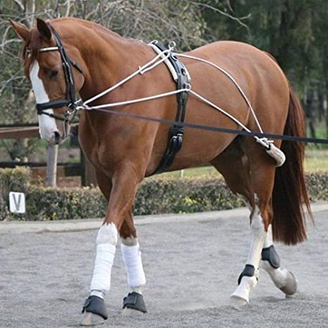 Horse Lunge Training System~Helps Build Top Line /& Engaging Hindquarters