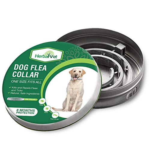 HerbalVet Dog Flea Collar for Flea and Tick Treatment and Prevention for Dogs| One Size Fits All, 100% Natural Oils, 100% Waterproof, 8 Month Essential Oil Flea Collar | Helpful E-Book Included (Best Price For Nexgard For Dogs)