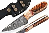 SharpWorld Beautiful Damascus Knife Made Of Remarkable Damascus Steel and Exotic Handle -Best Hunting Knife With Leather Sheath TJ101 (Ram Horn) For Sale