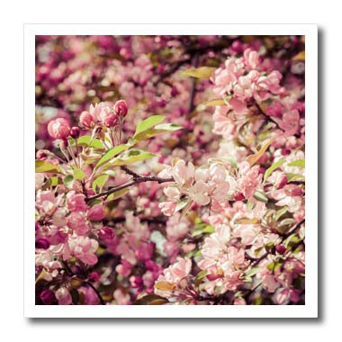 Apple Blossom Photo (3dRose Alexis Photography - Flowers Crab Apple - Soft pink colors of crab apple blossoms, stylized photo - 10x10 Iron on Heat Transfer for White Material (ht_271633_3))
