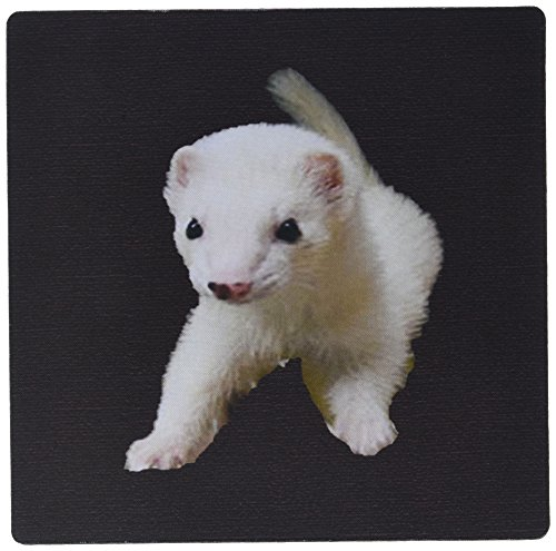 3dRose LLC 8 x 8 x 0.25 Inches Mouse Pad, Baby Albino Ferret (mp_17290_1)