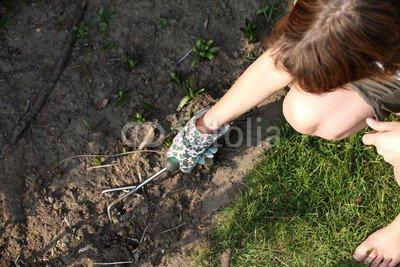 Toile image 120 x 80 cm: 'Frau jätet Unkraut in Garten von oben fotografiert', image sur Toile