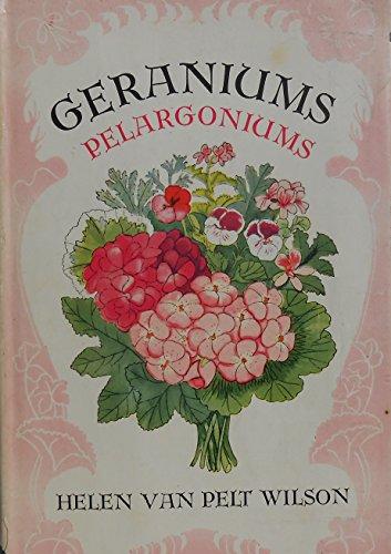 Geraniums, pelagoniums, for windows and gardens