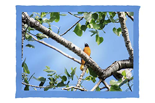 Lantern Press Baltimore Oriole Perched in a Tree - Photography A-92786 (60x80 Poly Fleece Thick Plush Blanket)