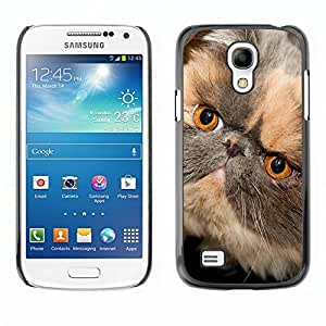 YiPhone /// Prima de resorte delgada de la cubierta del caso de Shell Armor - Persian Shorthair Short Muzzle Cat - Samsung Galaxy S4 Mini i9190 MINI VERSION!