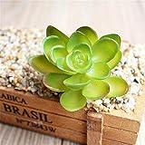 GogoForward Simulation Mini Plastic Miniature Succulents Plants Garden Home Office Decor(Turtle leaves)