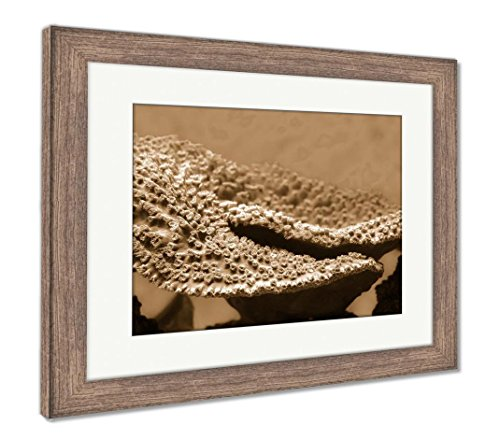 Ashley Framed Prints Montipora Coral Montipora Is A Genus Of Small Polyp Stony Coral In The Phylum, Wall Art Home Decoration, Sepia, 26x30 (frame size), Rustic Barn Wood Frame, (Montipora Coral)