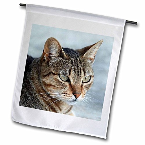 3dRose fl_16934_1 Tabby Cat Portrait Garden Flag, 12 by 18-Inch