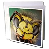 VWPICS MACRO INSECTS - Vespula germanica or German wasp - Greeting Cards-12 Greeting Cards with envelopes (gc_23022_2)