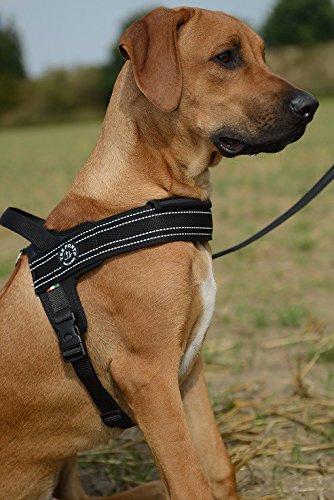 Tre Ponti TP1010 arnés del perro para perros grandes: Amazon.es ...