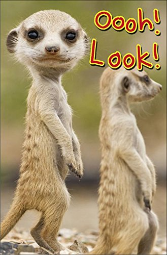 Amazon Oooh Look Meerkat Birthday Greeting Card Age Today