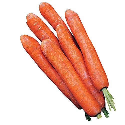 Burpee Nantes Half Long Carrot Seeds 3000 seeds