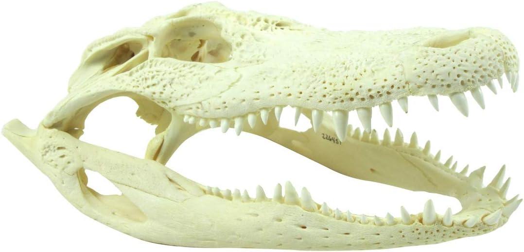 TG,LLC Treasure Gurus University of Florida Gators Tree Camo License Plate