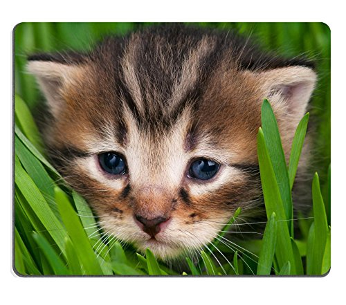 msd-natural-rubber-gaming-mousepad-image-id-37236610-cute-little-kitten-in-the-bright-green-grass-ov