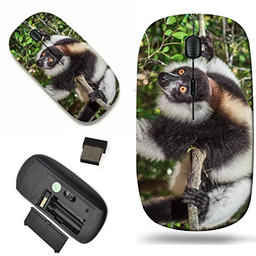 (Luxlady Wireless Mouse Travel 2.4G Wireless Mice with USB Receiver, 1000 DPI for notebook, pc, laptop, macdesign IMAGE ID: 35648851 Black and white ruffed lemur of Madagascar)