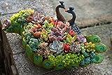 Cheap Worila Vintage Peacock Shape Succulent Planter Larger Handmade Resin Plant Pot / Flower Pot / Plant Container / Planter