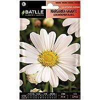 Semillas de Flores - Margarita Gigante Leucantemum blanca