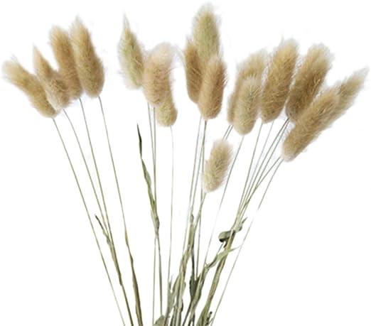 20Pcs Natural Dried Flower Lagurus Fake Rabbit Tail Grass Home Wedding DIY NEW