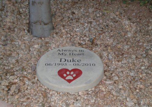 Pet Memorial Step Stone 11' Diameter 'Always in My - Stone 11'