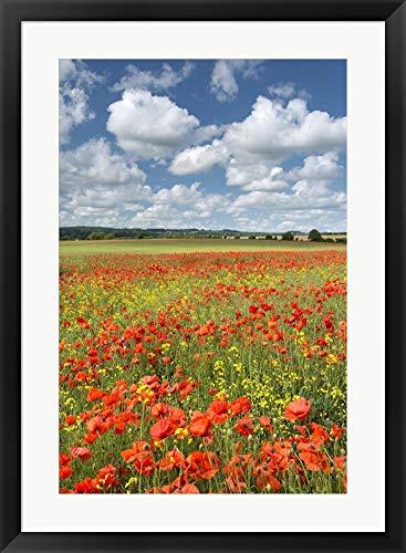 - Poppy Field by Adam Burton Framed Art Print Wall Picture, Black Frame, 24 x 33 inches