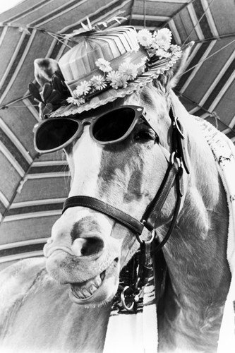 Mr. Ed the ULTIMATE horse pose smiling in sunglasses & hat 24x36 Poster cult TV series from Silverscreen
