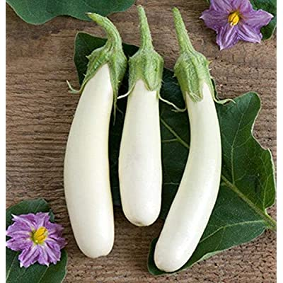 White Princess (F1) Eggplant Seeds (25 Seeds) : Garden & Outdoor