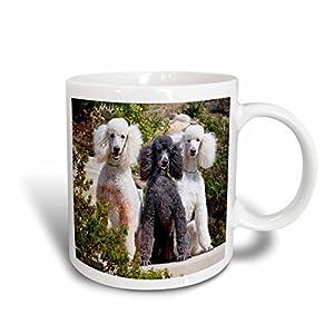 "3dRose 192385_2""Usa California Three Standard Poodles Sitting Together Ceramic Mug, 15 oz, White 30"