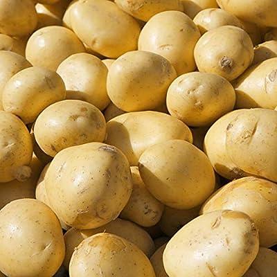 QiBest 20pcs Gold Potatoes Seeds Nutrition Green Vegetables Home Garden Farm Plant Vegetables : Garden & Outdoor