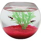 Aquarius BL3.50GLS 1-Gallon Glass Bowl