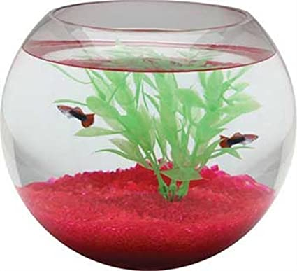 Amazon Com Koller Products 1 Gallon Glass Fish Bowl Pet Supplies