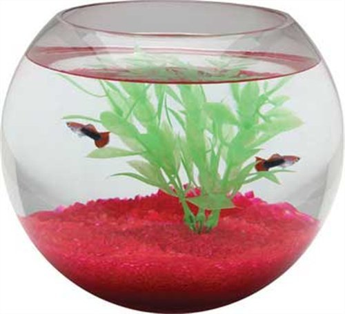 -Gallon Glass Bowl (Gallon Tank)