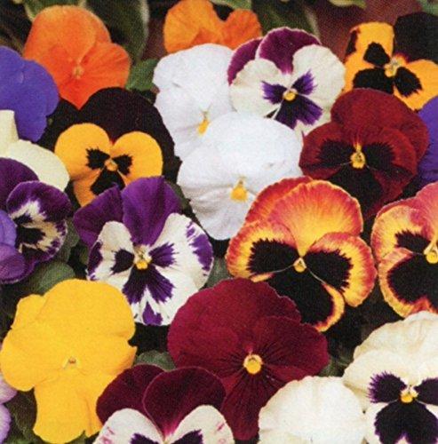 desertcart Oman: Brookside Nursery Fresh | Buy Brookside