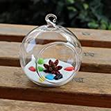 Dovewill Creative Hanging Glass Ball Flower Vase Bottle Hydroponic Container Home Garden Yard DIY Decor - 8