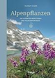 Alpenpflanzen: Die schönsten Bergtouren und Pflanzenportraits