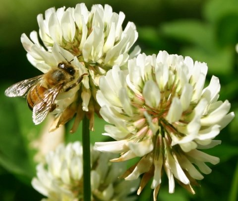 UPC 671809376001, 1 Gallon Kansas Clover Honey