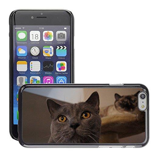 """Just Phone Cases Hard plastica indietro Case Custodie Cover pelle protettiva Per // M00129182 Cat Hangover Gris Chat // Apple iPhone 6 PLUS 5.5"""""""