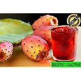 Prickly Pear Cactus Opuntia Edible Fruit 3 Seeds!