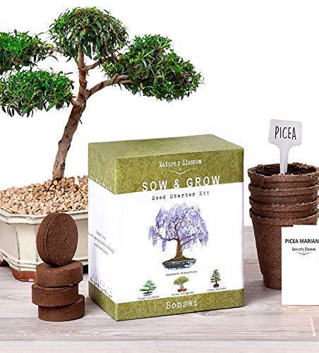 Nature's Blossom Bonsai Garden Seed Starter Kit - Easily Grow 4 Types of Miniature Trees Indoors: A Complete Gardening Set Organic Seeds, Soil, Planting Pots, Plant Labels & Growing Guide. Unique Gift ()