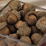 Nutty-brown Artificial Acorns with Natural Acorn Caps for Fall Crafting, and Autumn Decorating