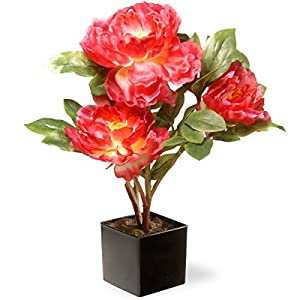 National Tree 15 Inch Fuchsia Peony Flowers with Black Square Ceramic Base (NF36-5128D-1) 23