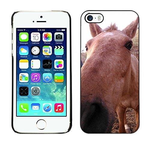Premio Sottile Slim Cassa Custodia Case Cover Shell // F00012081 cheval // Apple iPhone 5 5S 5G