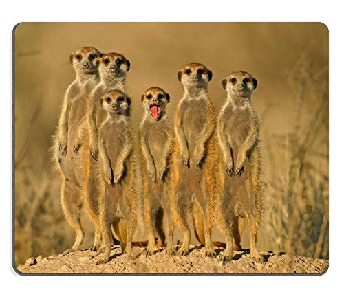 Luxlady Gaming Mousepad Suricate Meerkat Family South Africa Image ID 410970 (Types Of Wild Animals In South Africa)