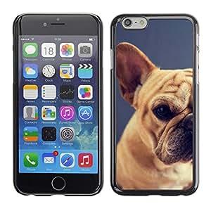 Raza Pug Puppy Dog Pet Boston Terrier - Metal de aluminio y de plástico duro Caja del teléfono - Negro - Apple (5.5 inches!!!) iPhone 6+ Plus / 6S+ Plus