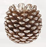 Pine Cone Taper Candle Stick Holder, 3.5 x 4 inches for...