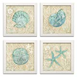 4 Lovely Teal and Brown Ocean Seashell Sand Dollar and Star Fish Collage Poster Prints; Nautical Décor; Four 12 by 12-Inch White Framed Prints Ready to hang!